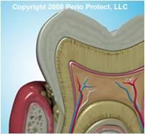 Oral-bacteria